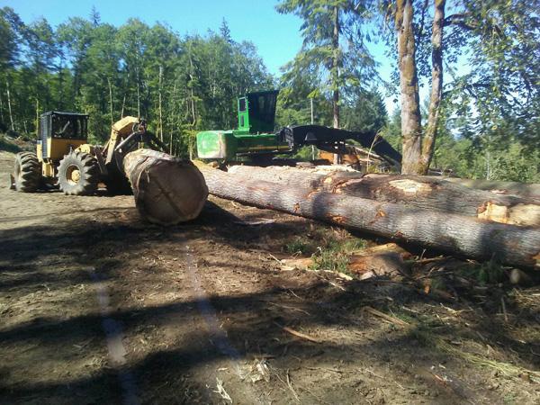 timber management Olympia wa