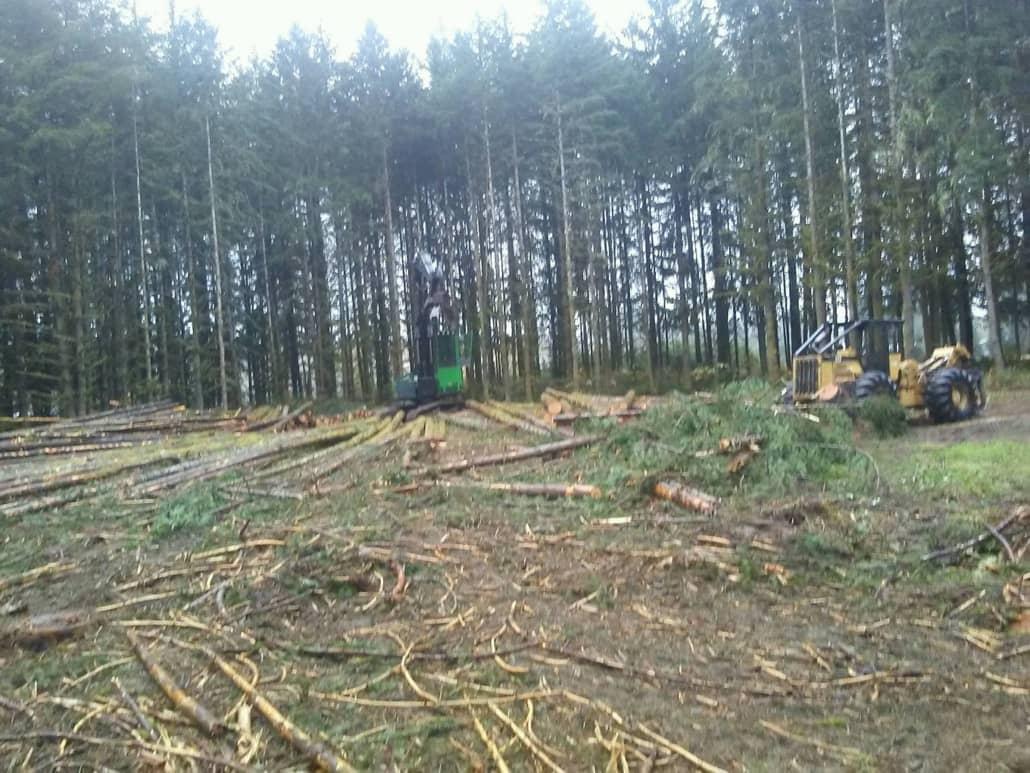 timber management Camas wa