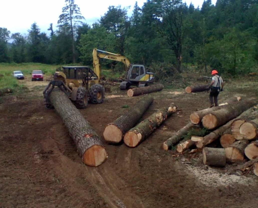 timber management Chehalis wa
