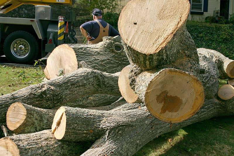 best timber management near me